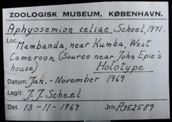 02-0-Copr_1969-JJ_Scheel_Holotype_NHMD_P352589t.jpg
