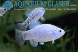 03-0-Copr_2019-Aquarium_Glasert.jpg