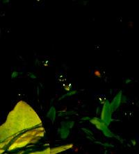 44-0-Copr-2012_RJ_Sextont.jpg