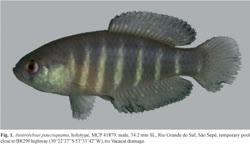 00-0-Copr_2008-W_Costa-Holotype_MCP_41879_M_34.2mmt.jpg