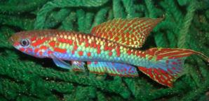 fwkillifishe1242015001t.jpg