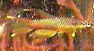 00-7-Copr_1997_Richard_Sexton-185x100x24_7883.jpg